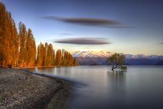 The famous tree of Lake Wanaka, Central Otago