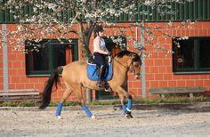 # Frühling # Training #Dressur #Pony <3   Schaut doch mal in Desperados Zuhause vorbei: www.beggendorfer-hof.de