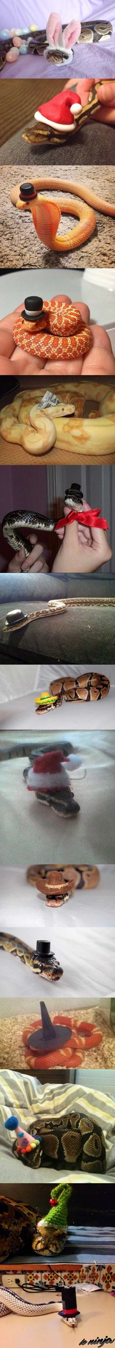 Idk why, but snake are so much less intimidating with hats on.<<< #snakes