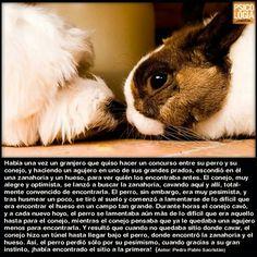 Cuento del perro y el conejo, di no al conformismo.
