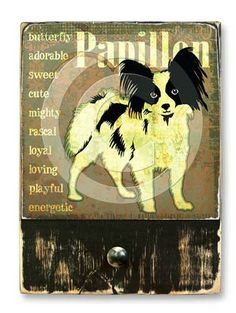 #Papillon  #ruckusdog #ruckusdogproducts