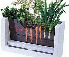 Grow a garden with visible roots & veges