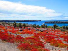 baltra island - Google Search Galapagos Islands Ecuador, Theory Of Evolution, Animal Species, Archipelago, Pacific Ocean, Study Abroad, Peru, Wildlife, Coast
