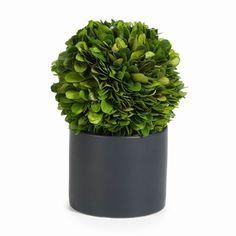 Zodax CH-2557 Round Boxwood Topiary in Black Glazed Pot