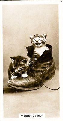 vintage cat faces : Photo