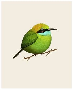 Mike Mitchell - Little Green Bee Eater   http://www.sirmitchell.com/