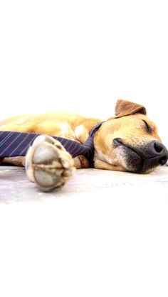 Fun Dog Facts   Take a Quick Break