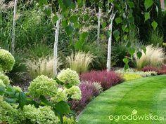 Na zielonej... trawce :) - strona 480 - Forum ogrodnicze - Ogrodowisko