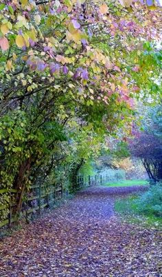 Take me back to the leafy lanes of England. This one is in Watermead Country Park, Leicestershire, England. Beautiful World, Beautiful Places, Pictures Of England, All Nature, Flowers Nature, Flowers Garden, Parcs, Belle Photo, Pretty Pictures