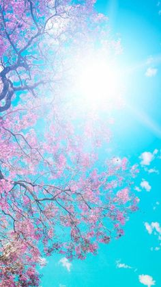 Sunny Pink Blossom Tree Landscapee  #iPhone #7 #wallpaper