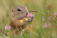 Taking the time to smell the Flowers.