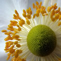 Macro photography for beginners- Part 2