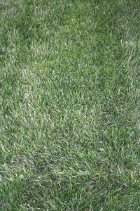 Can You Lay Sod Over Existing Grass? thumbnail