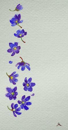 Hepatica nobilis by isletree on DeviantArt