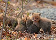 Father and Daughter Find Charming Baby Foxes in Their Garden