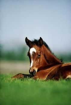 Thoroughbred Foal, Ireland Photograph by The Irish Image Collection