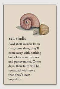 seashells - Community - Google+