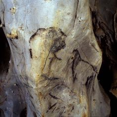 Cueva Las Monedas #Cantabria #Spain #Travel #Caves #Prehistory Cro Magnon, Paleolithic Art, Caveman Food, Glyphs, Ancient Art, Picture Wall, Rock Art, Vacation Spots, Archaeology