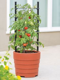 Gardener's Victory Self-Watering Planter with Support System-Gardener's Supply Company Patio Planters, Planter Pots, Garden Supplies, Garden Tools, Garden Ideas, Garden Projects, Backyard Ideas, Determinate Tomatoes, Growing Tomatoes From Seed