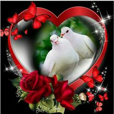 Flying Jewels, God`s Awesome & Gorgeous Creation. Dove Images, Dove Pictures, Love Heart Images, Love You Images, Jesus Pictures, Beautiful Love Pictures, Beautiful Gif, Beautiful Roses, Coeur Gif