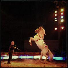 Zirkus, Circus... Leben zwischen Zauber und Tieren. Und mit dem Tierschutz.
