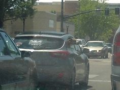 PT 669 BOISE IDAHO. APR 15 DOG WITH HIS HEAD OUT THE WINDOW.