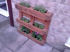 Planter for my mum all planted and ready