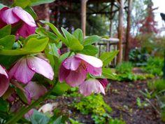 Reader Rock Garden (Calgary) - All You Need to Know Before You Go - TripAdvisor Reader Rock Garden, Garden Cafe, Calgary, Vacation Ideas, Need To Know, Trip Advisor, Mom, Plants, Summer