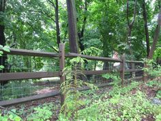 Backyard fencing Ideas | Low Fence Ideas | back yard bliss.....