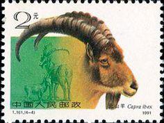Northern Goat(Capra ibex)