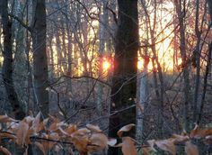 A walk in the woods in Columbus, Ohio
