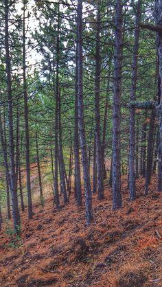Forest rainy day. 📍Mount Spilos Manisa
