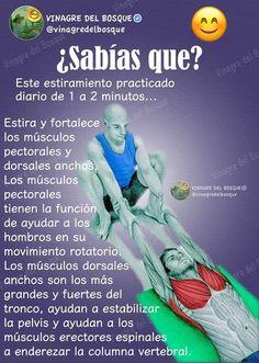 Stretching in Spanish Yoga Sequences, Yoga Poses, Postural, Yoga Anatomy, Yoga Mantras, Relaxing Yoga, Kundalini Yoga, Yoga Tips, Pilates Workout