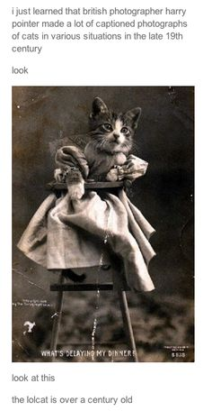 century-old lolcats (captioned: WHAT'S DELAYING MY DINNER)