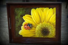 Lady bug on flower serving tray.  Acrylics.