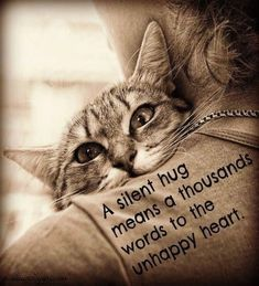 A silent hug means a thousand words to the unhappy heart. Sometimes We All Need A Little Hug! HUGS For you, Joanne. Cat Quotes, Animal Quotes, Cat Sayings, Wisdom Quotes, Funny Quotes, Life Quotes, Crazy Cat Lady, Crazy Cats, I Love Cats