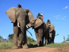 Elephant experience in South Africa