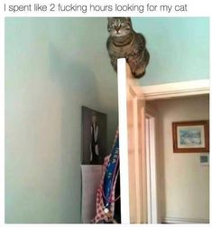 Cat memes and cute cat pictures Owner of two wonderful moggies Check out my fitness IG . Cat memes and cute cat pictures Owner of two wonderful moggies Check out my fitness IG Insomnia, Cat Memes, Cats Of Instagram, Weed, Cute Cats, Cat Lovers, Animal, Funny, Pictures