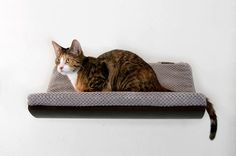 """Your cat will be delighted to have a chance to lounge, doze off and sleep on an oval shelf """"CHILL"""" mounted to the wall. It will be perfect for your"""