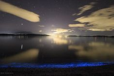 Singly, each individual emits a tiny speck of light, but en masse, they can light up a beach with an eerie other-worldly glow… Can Lights, Natural Beauty, Northern Lights, Sparkle, The Incredibles, Sea, Water, Travel, Gripe Water