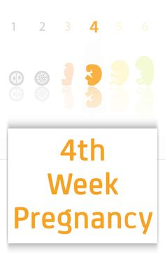 4th Week Pregnancy - Symptoms, Baby Development, Tips And Body Changes