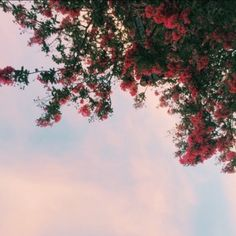 pink flowers with the background of cloudy blue skies. an aesthetic. Fred Instagram, Disney Instagram, Wild Flowers, Beautiful Flowers, Plants Are Friends, Flower Aesthetic, Red Aesthetic, Jolie Photo, Pretty Pictures