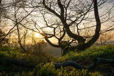 https://flic.kr/p/rULiyp | Es ist Frühling | Im November vergangenen Jahres bin ich schon einmal frühzeitig aufgestanden, um auf dem Pfaffenstein (Sächsische Schweiz/Sachsen) den Sonnenaufgang zu fotografieren. Leider ließ sich die Sonne damals nicht blicken. Auf dem Weg zur Barbarine entdeckte ich jedoch diesen verwundenen, faszinierenden Baum am Wegesrand, von dem ich auch ein Foto bei Flickr hochlud. An diesem Sonntag bin ich abermals sehr zeitig zum Pfaffenstein gefahren und wurde…