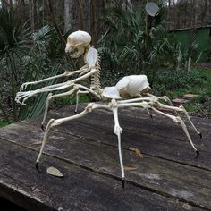 'Arachne' - I used bones from at least 10 different species including macaque monkey, cat, snapping turtle, boa constrictor, deer, raccoon, opossum, porcupine, and wild turkey. This is a large piece, maybe too large to ship, but I plan to bring it to Horrorhound Weekend in Cincinnati next month if anyone is interested in seeing it in person.