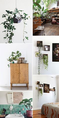 plant life / sfgirlbybay So beautiful! Image Deco, Decoration Plante, Plant Decor, Indoor Plants, Hanging Plants, Indoor Garden, Interior Inspiration, Interior And Exterior, Planting Flowers
