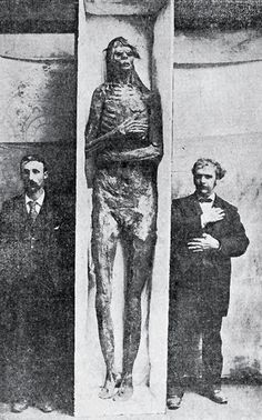 """The mummy of the """"tallest human giant who over lived"""" was being barked by a at the Atlantic exposition while., a number of these Smithsonian scientists were there. They asked permission to examine It and when consent was given applied their tapes and found that It measured eight feet four Inches from crown lo heel. 1895"""