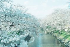 Cherry Blossom | Stunning Places #StunningPlaces