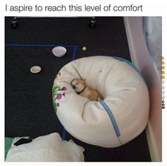 This level of comfort