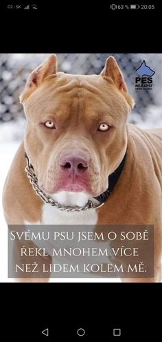 Psy, Pitbulls, Facebook, Creative, Animals, Animales, Animaux, Pitt Bulls, Animal Memes