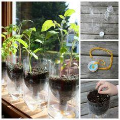 DIY Self-Watering Seed Starter Pots from Plastic Bottles #diy #gardening